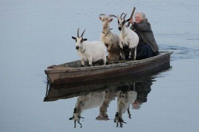 Goats-In-Weird-Places-Goats-On-A-Boat